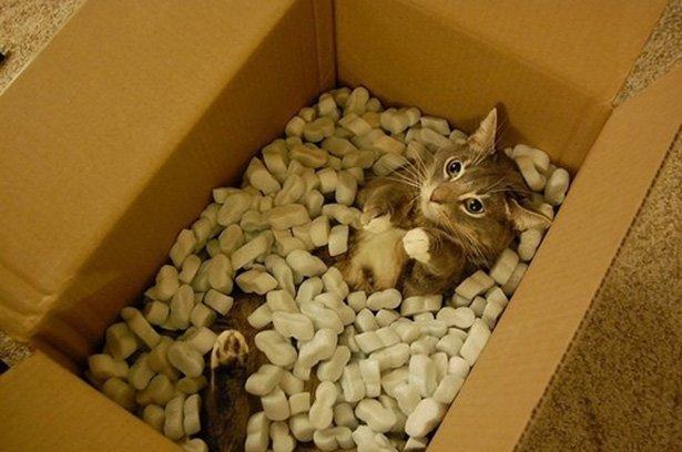 Коти vs ємності: муркотіння з глибин коробки, фото-4