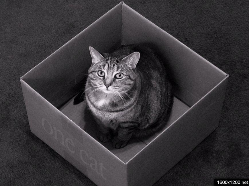Коти vs ємності: муркотіння з глибин коробки (фото) - фото 7