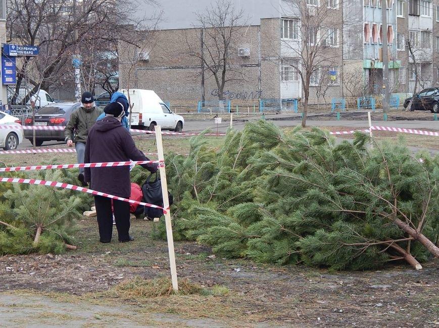 В день святого Николая цены на елочных базарах в Киеве не кусаются (ФОТО) (фото) - фото 1