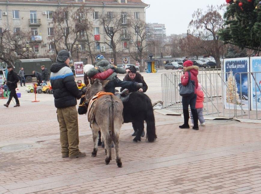 В Кировограде проходит открытие главной елки области (фото) - фото 1