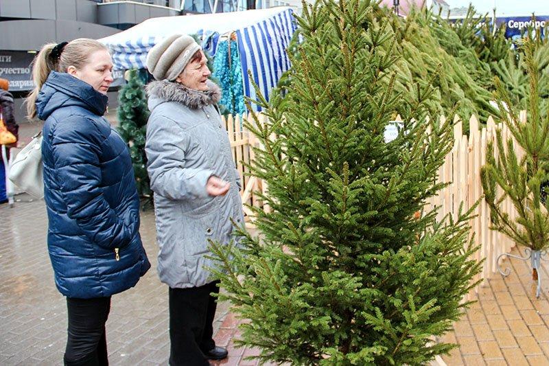 На улицах Белгорода появились новогодние ёлки, фото-2
