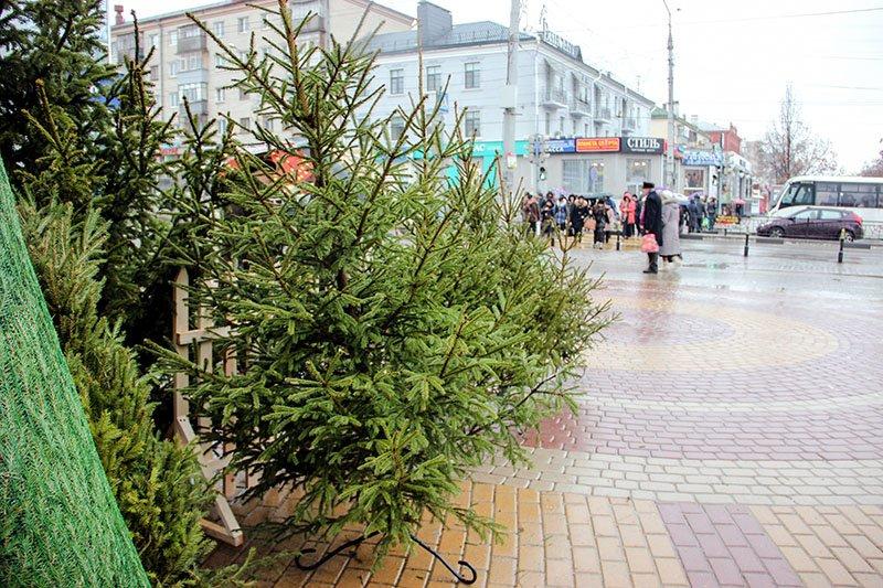 На улицах Белгорода появились новогодние ёлки, фото-1