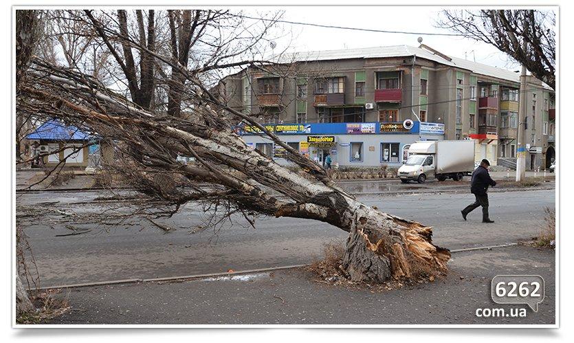 Тополь упал на ул. К.Мракса(фотфакт) (фото) - фото 2