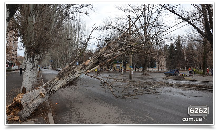 Тополь упал на ул. К.Мракса(фотфакт) (фото) - фото 3