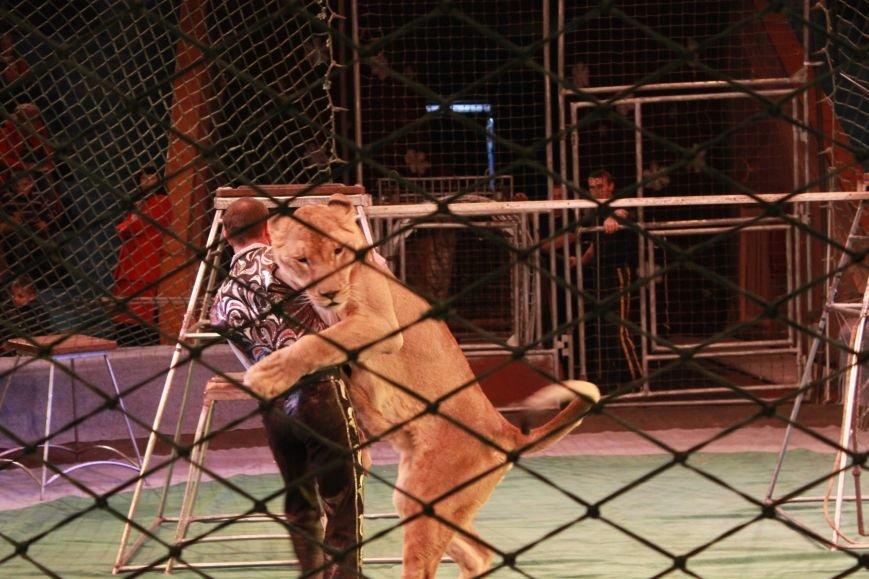 Громкая премьера в цирке Запорожья: восторг зрителя, шквал аплодисментов и буря эмоций (ФОТО), фото-3
