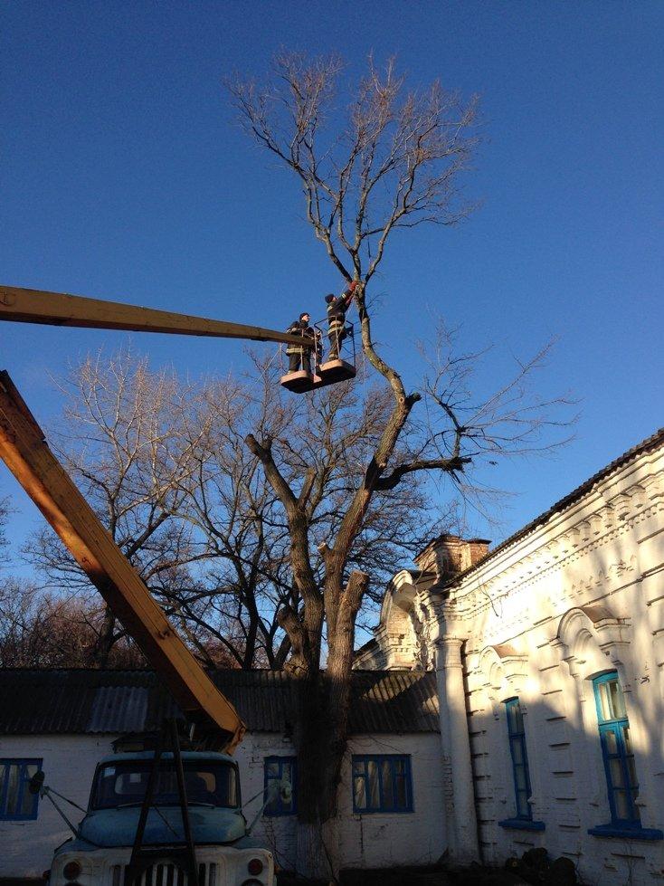 Кіровоградський район: рятувальники розпиляли аварійне дерево на території лікувальної установи, фото-1