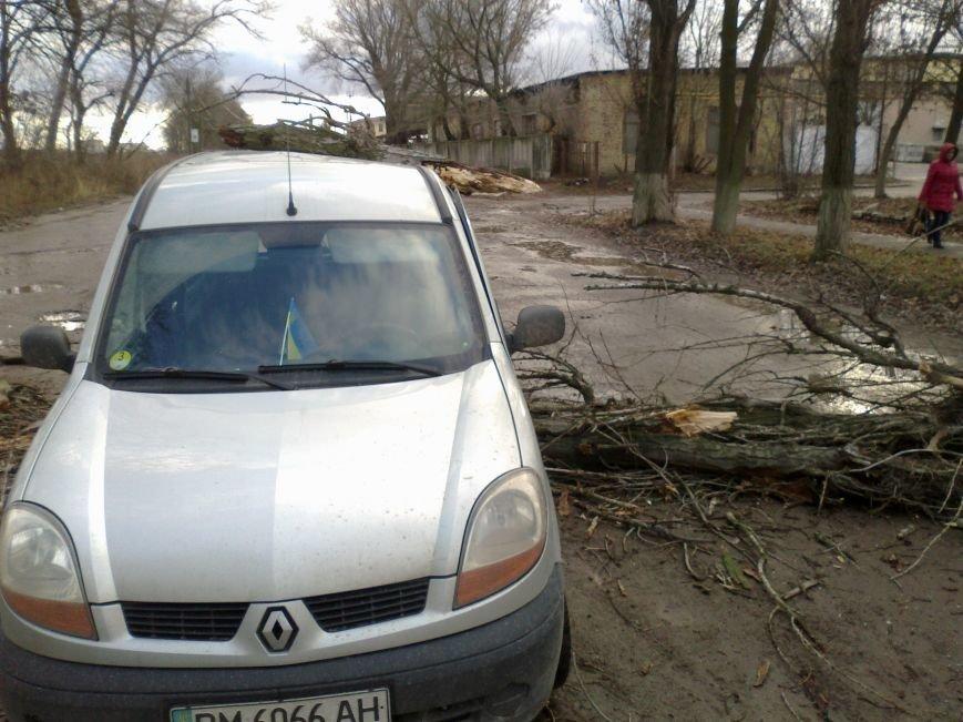 В Сумах на едущий автомобиль рухнуло аварийное дерево (ФОТО) (фото) - фото 1