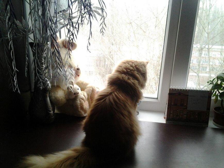 Синопники не обманули: В Одессу вернулась зима (ФОТО) (фото) - фото 1
