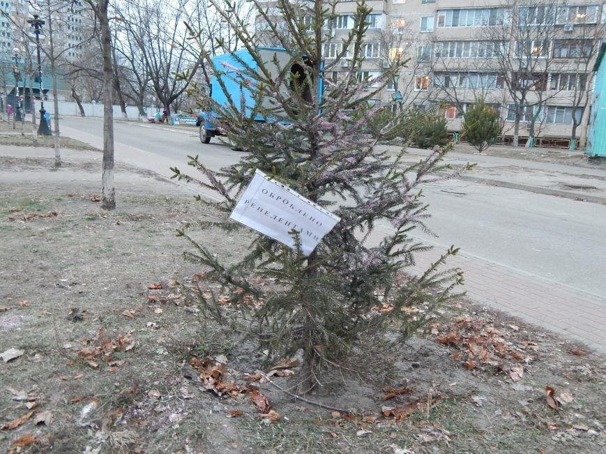 Киевские елки обрабатывают спецраствором для отпугивания дровосеков (ФОТОФАКТ) (фото) - фото 1