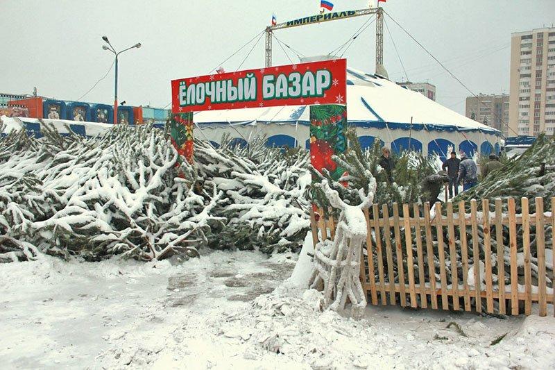 В предновогодние выходные Белгород полностью покрылся снегом (фото) - фото 1