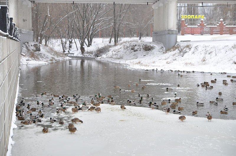 В последние выходные перед Новым годом Белгород полностью покрылся снегом, фото-4
