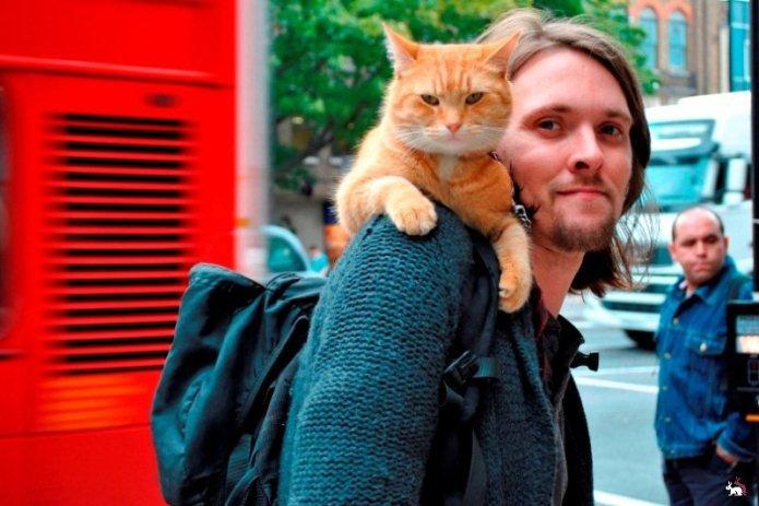 Вуличний кіт на ім'я Боб. Історія одного дива, фото-1
