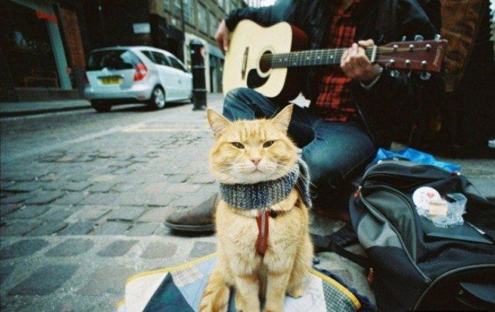 Вуличний кіт на ім'я Боб. Історія одного дива (фото) - фото 2