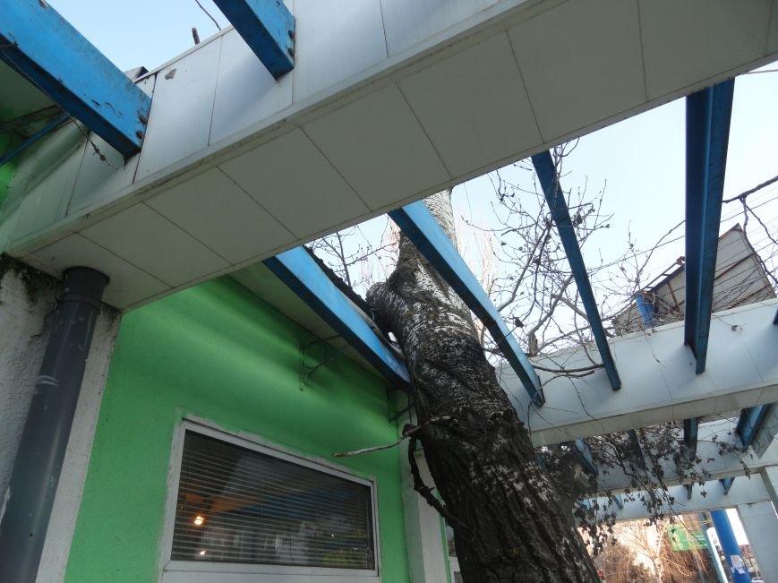 В Мариуполе на цветочный павильон упало дерево (ФОТОФАКТ) (фото) - фото 1