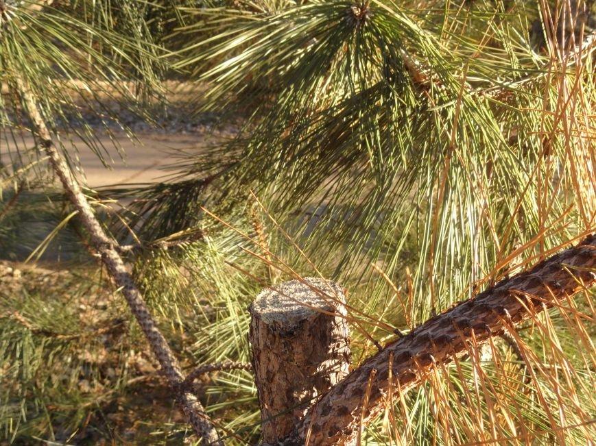 В Мариуполе браконьеры обезглавили ели (ФОТОФАКТ) (фото) - фото 1