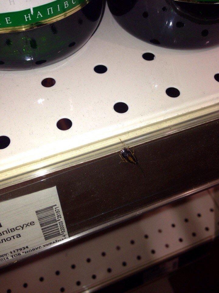 В одному з тернопільських супермаркетів помітили на прилавках справжніх тарганів (фото) (фото) - фото 1