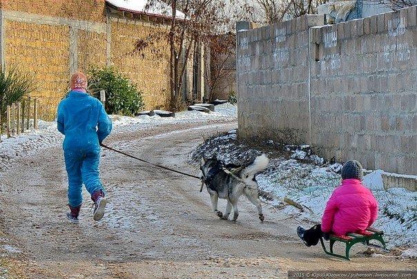ФОТОФАКТ: В Крыму появились собачьи упряжки. Катают в санях даже без снега (фото) - фото 1