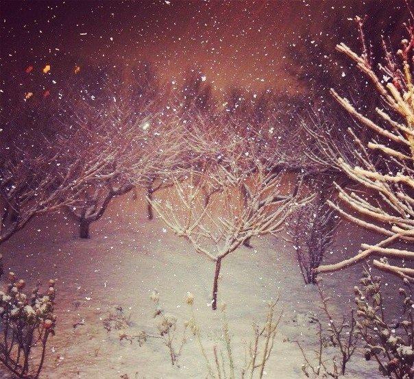 Симферопольцы в соцсетях делятся живописными снимками заснеженного города (ФОТО) (фото) - фото 1