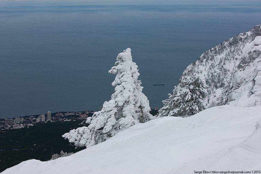 Ялтинская зимняя сказка- 2015 в фотографиях (фото) - фото 2