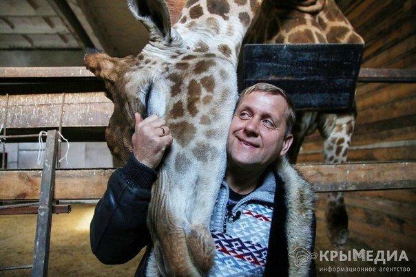 жираф4