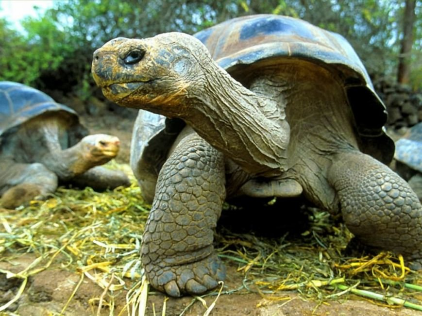 Интересные факты о животных (фото) - фото 3