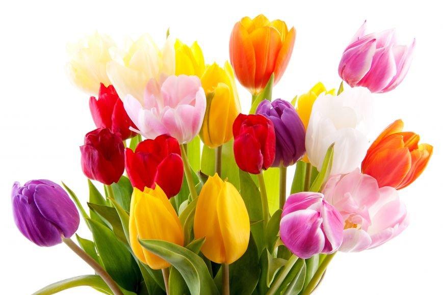 Салон мобильной связи «София» поздравляет очаровательных девушек и женщин с праздником весны-8 марта!, фото-1