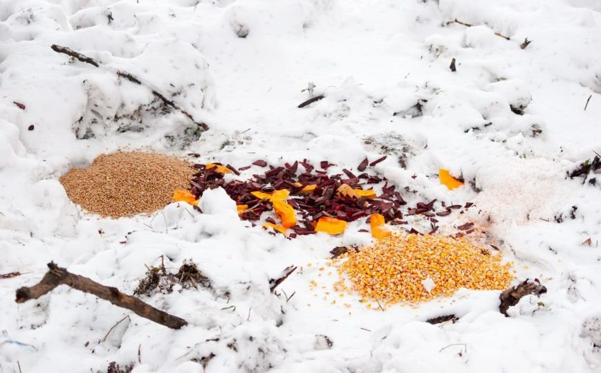 В Запорожье энтузиасты устроили зимнюю кормежку на Хортице (ФОТО) (фото) - фото 1