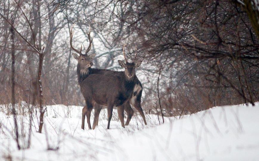 В Запорожье энтузиасты устроили зимнюю кормежку на Хортице (ФОТО), фото-3