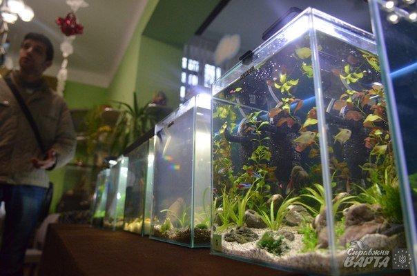 Де у Львові можна поспостерігати за життям мурах та риб? (ФОТОРЕПОРТАЖ) (фото) - фото 5