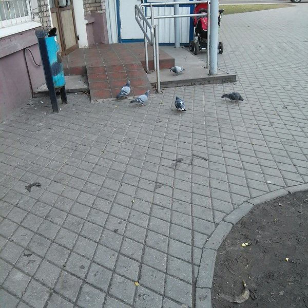 На ул. Советских Пограничников бабушка выбрасывает еду на прохожих (Фото) (фото) - фото 3