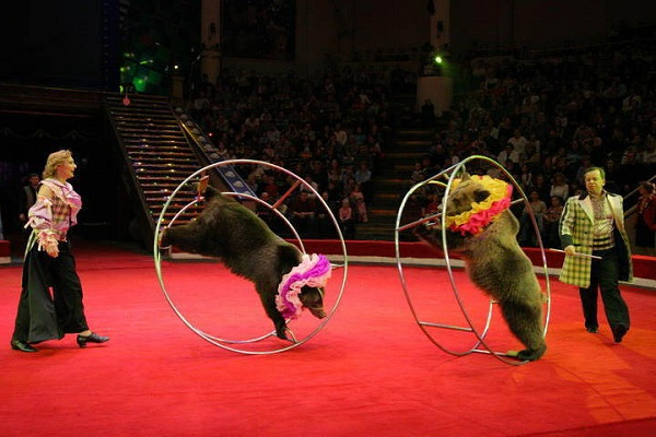 19-20 февраля в Гродно выступит два московских цирка: (фото) - фото 2