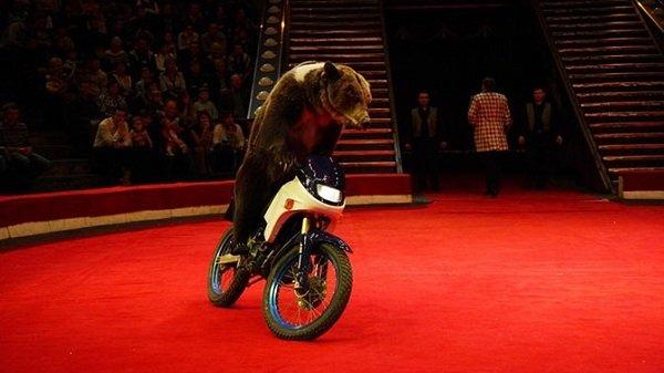 19-20 февраля в Гродно выступит два московских цирка: (фото) - фото 4