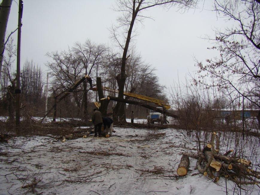 Куда в Красноармейске может привести дорога, устланная благими намерениями (спиленными деревьями) (фото) - фото 2