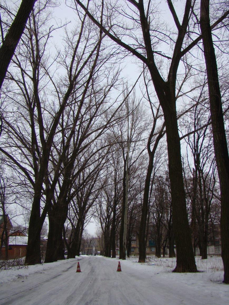 Куда в Красноармейске может привести дорога, устланная благими намерениями (спиленными деревьями) (фото) - фото 1