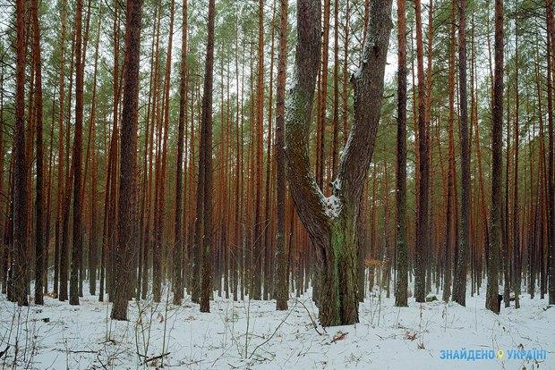Проект «Знайдено в Україні» приехал в Черниговскую область (фото) - фото 3