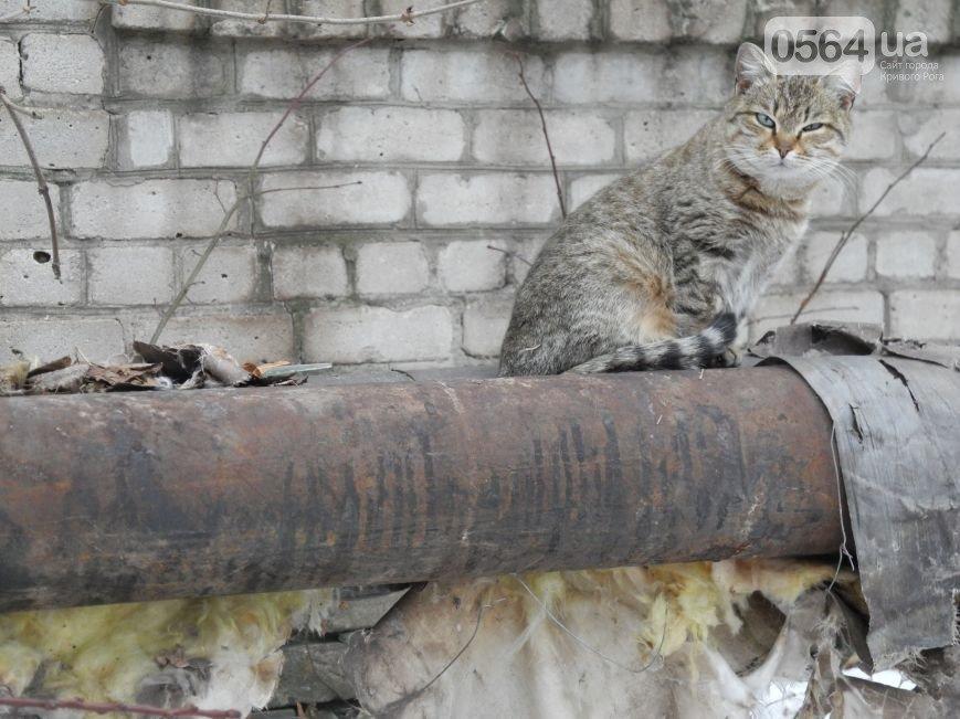 В Кривом Роге стартовал «Аукцион свиданий», в зону АТО передали автомобиль и гуманитарную помощь, голые трубы обживают коты (фото) - фото 3