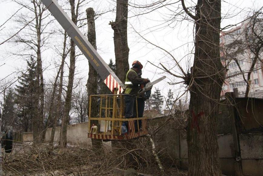"""Комунальтники на """"Східному"""" у Тернополі взялись омолоджувати дерева (фото) (фото) - фото 1"""