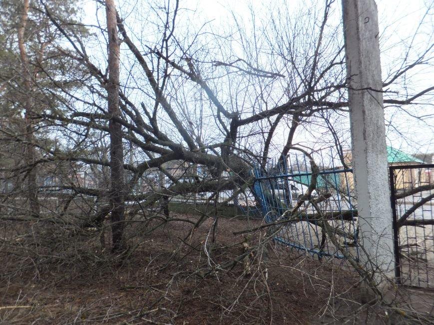 Фотофакт. В Кировограде большое дерево рухнуло на забор (фото) - фото 1