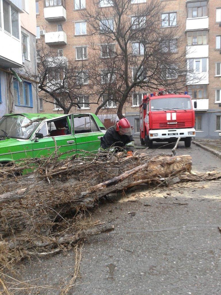 Фотофакт. В Кировограде большое дерево рухнуло на забор и автомобиль (фото) - фото 3