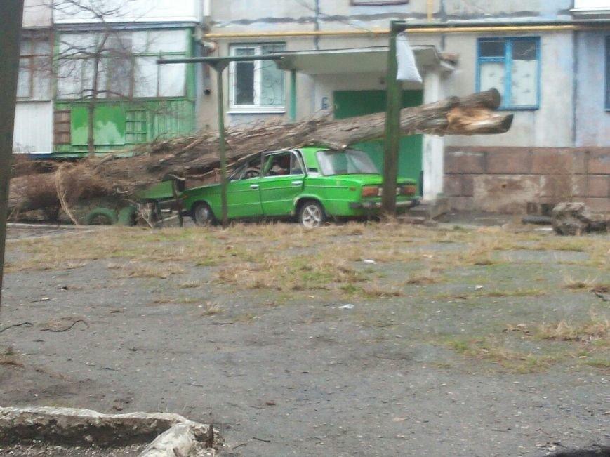 Фотофакт. В Кировограде большое дерево рухнуло на забор (фото) - фото 2