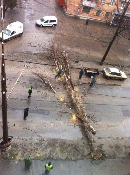 В Николаеве из-за непогоды дерево перекрыло дорогу, фото-2