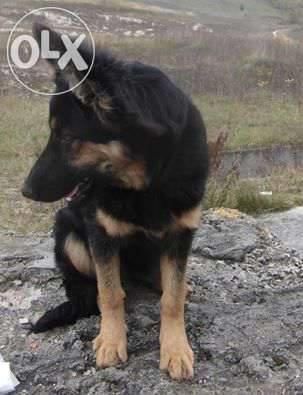 У Львові троє зловмисників викрали породистого пса (ФОТО), фото-1