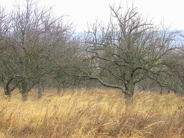 Що Ви знаєте про Горя́нську рото́нду на околицях Ужгорода (ФОТО), фото-1