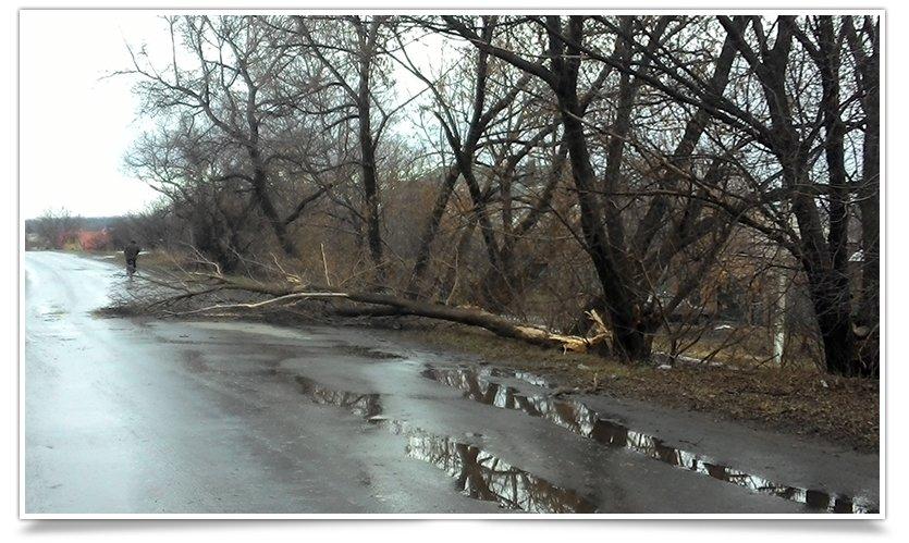 Ночью в Славянске прошёл ураган, повалены деревья и заборы (фото) - фото 3