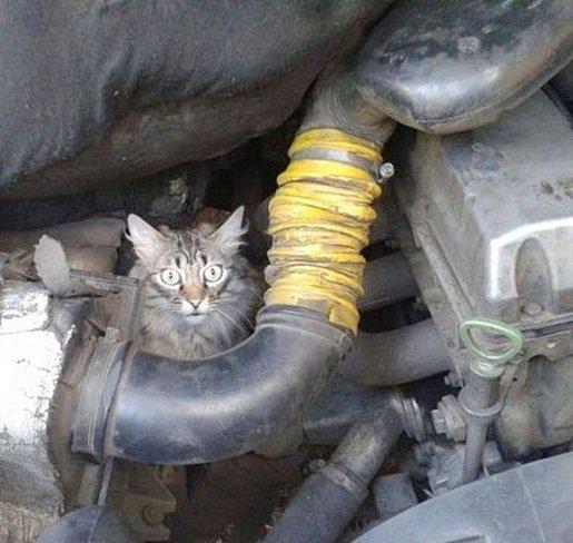 Зачем нужно осматривать свой автомобиль прежде чем отъезжать со стоянки (фото) - фото 1