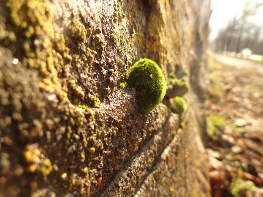 Фотопроект «Внезапная весна» (фото) - фото 1