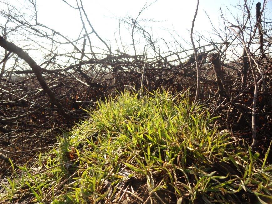 Фотопроект «Внезапная весна» (фото) - фото 8