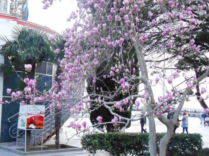 ...А скоро весна! Несколько несправедливо неопубликованных весенних ялтинских фото от 3654 :) (фото) - фото 7