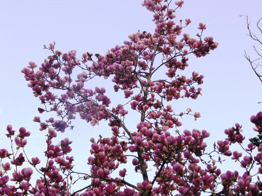 ...А скоро весна! Несколько несправедливо неопубликованных весенних ялтинских фото от 3654 :) (фото) - фото 5