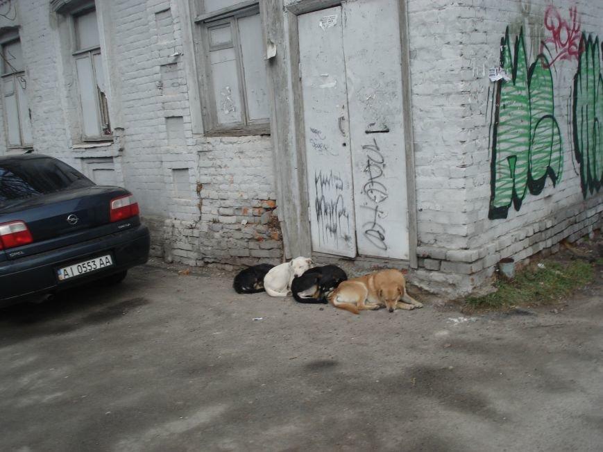 В Днепропетровске на улице Чкалова живет необычный собачий квартет (ФОТОФАКТ) (фото) - фото 1